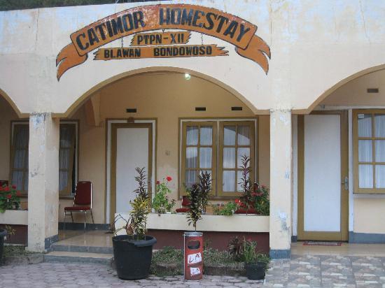 Catimor Homestay